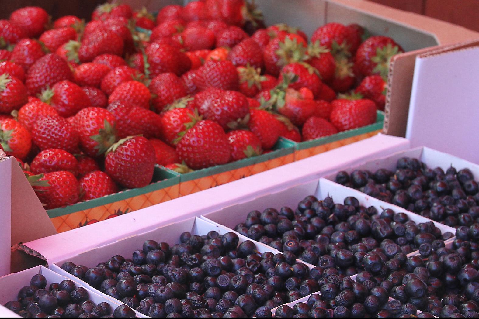 jordgubbar och blåbär på Gotland